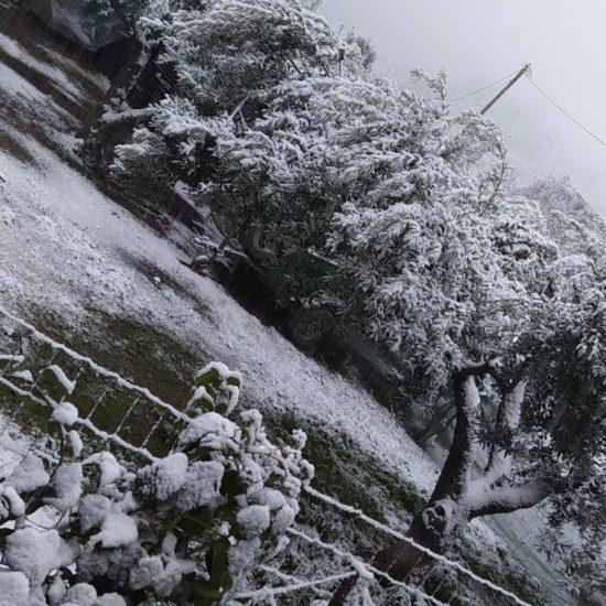 Tragos_Aktuelles-Der Schnee